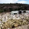 100 tonnellate di marijuana bruciate in Messico (3)
