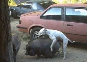 Anche gli animali sbagliano (4)