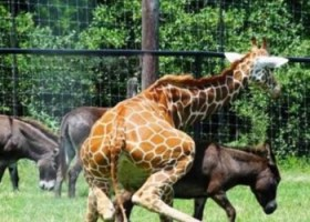 Anche gli animali sbagliano (6)