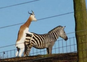 Anche gli animali sbagliano (7)
