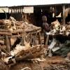 Akodessewa fetish market (1)