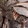 Cappella di Oak ad Allouville-Bellefousse (3)