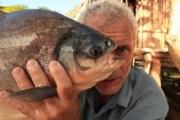 Pacu, il pesce tagliatore di palle (4)