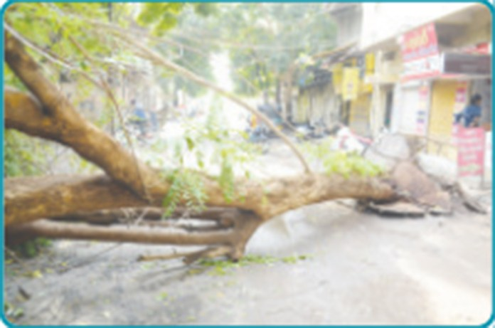 panchnath-and-kkv-trees-collapse-near-the-hall:-car-seized