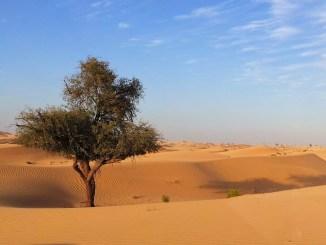desert 2471553 1280