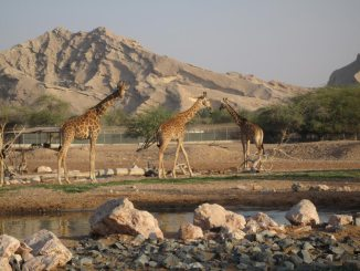 al ain zoo and aquarium