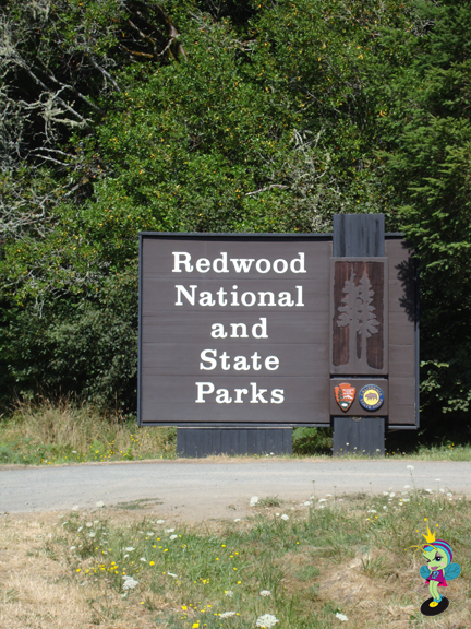 And not long after that the Redwood National and State Parks