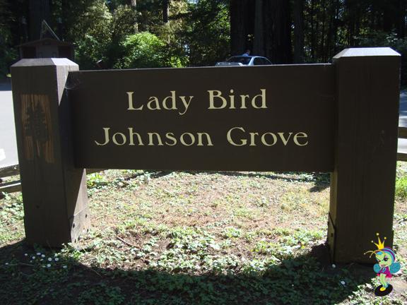 Lady Bird Johnson Grove offers a beautiful nature walk