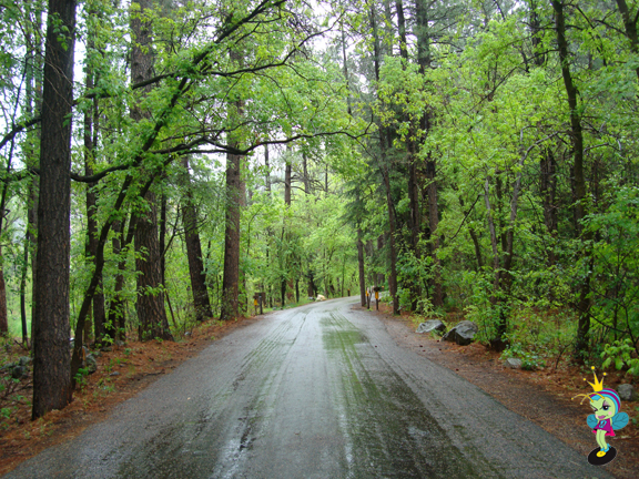 this is the road in the campground... I wanna go back just looking at it!