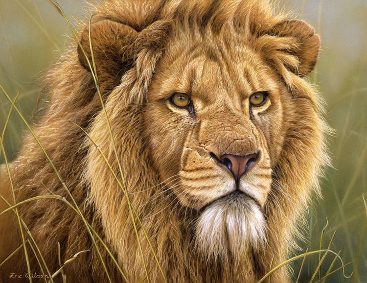 هل تصدق أنها ليست صور؟ لوحات الحياة البرية لـ اريك ويلسون