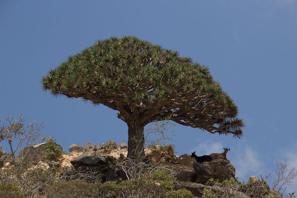 De boom die te langzaam groeit