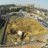 زراعة الأرز على سطح المنازل