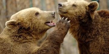 حيوانات داخل أقفاص حديقة حيوانات