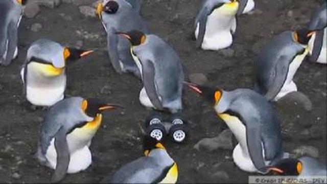 البطريق الآلي