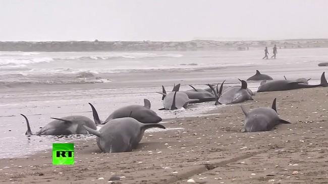 حيتان تصل شواطئ اليابان