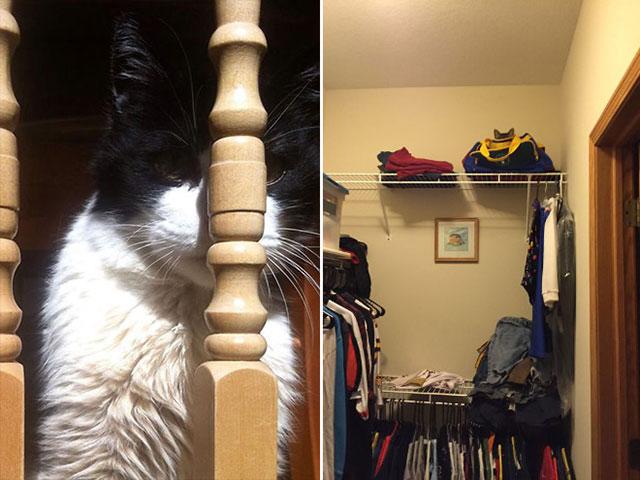 صور مضحكة لقطط النينجا الظريفة
