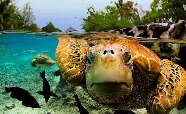 صور في الماء