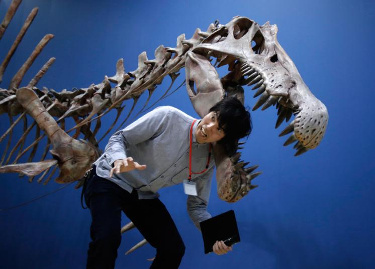 هيكل ديناصور