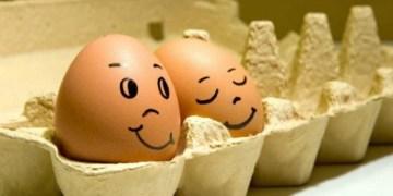 إنتاج البيض