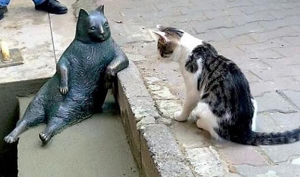 قط تركي