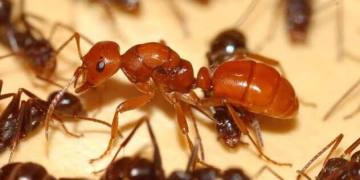 Facts That Prove Ants Are Evil