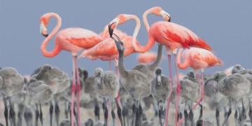 مسابقة تصوير الطيور