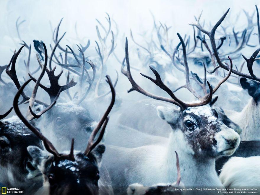 أجمل صور الحياة البرية