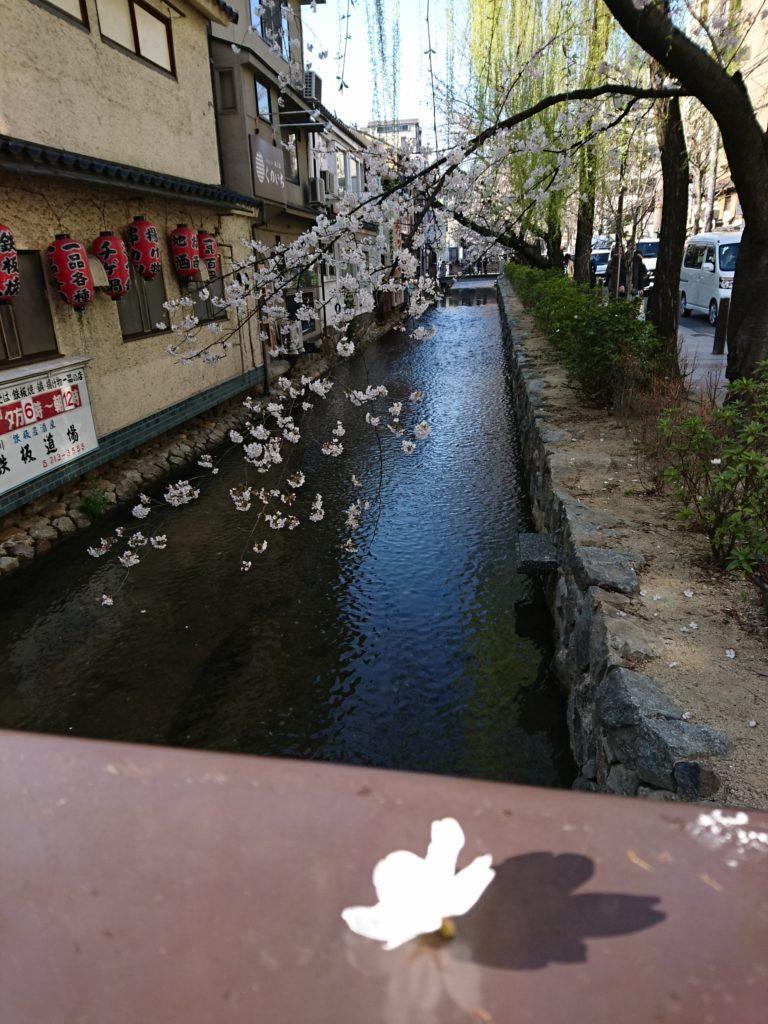 京都木屋町・高瀬川の桜その1