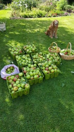 Abundance London Fruit Picking Sorting Fruit