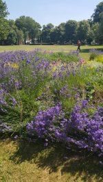 Abundance London Herb Knot Garden