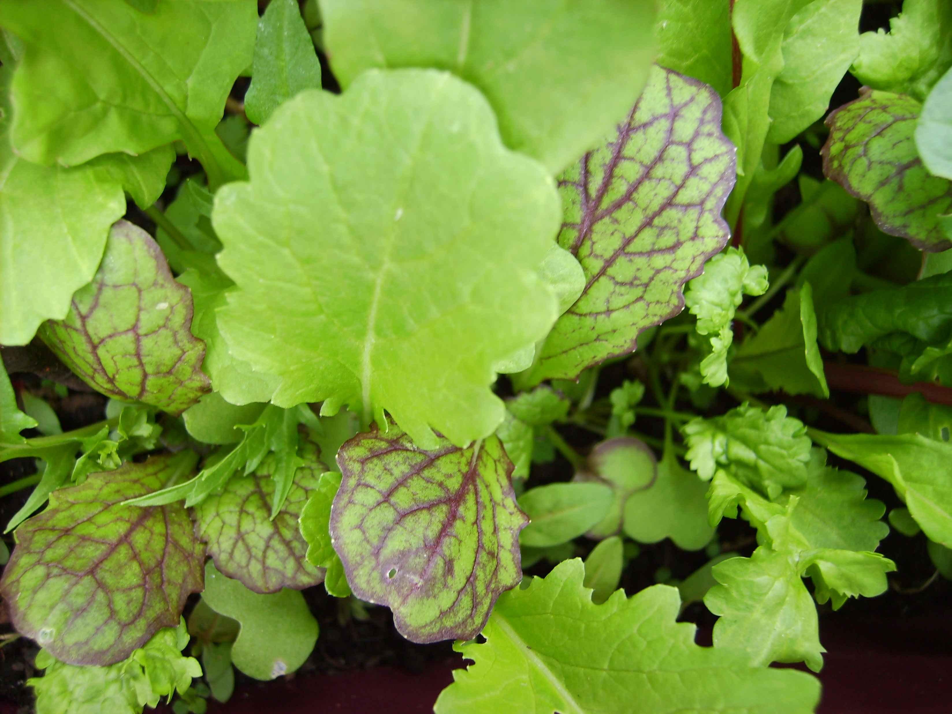 Salad up close