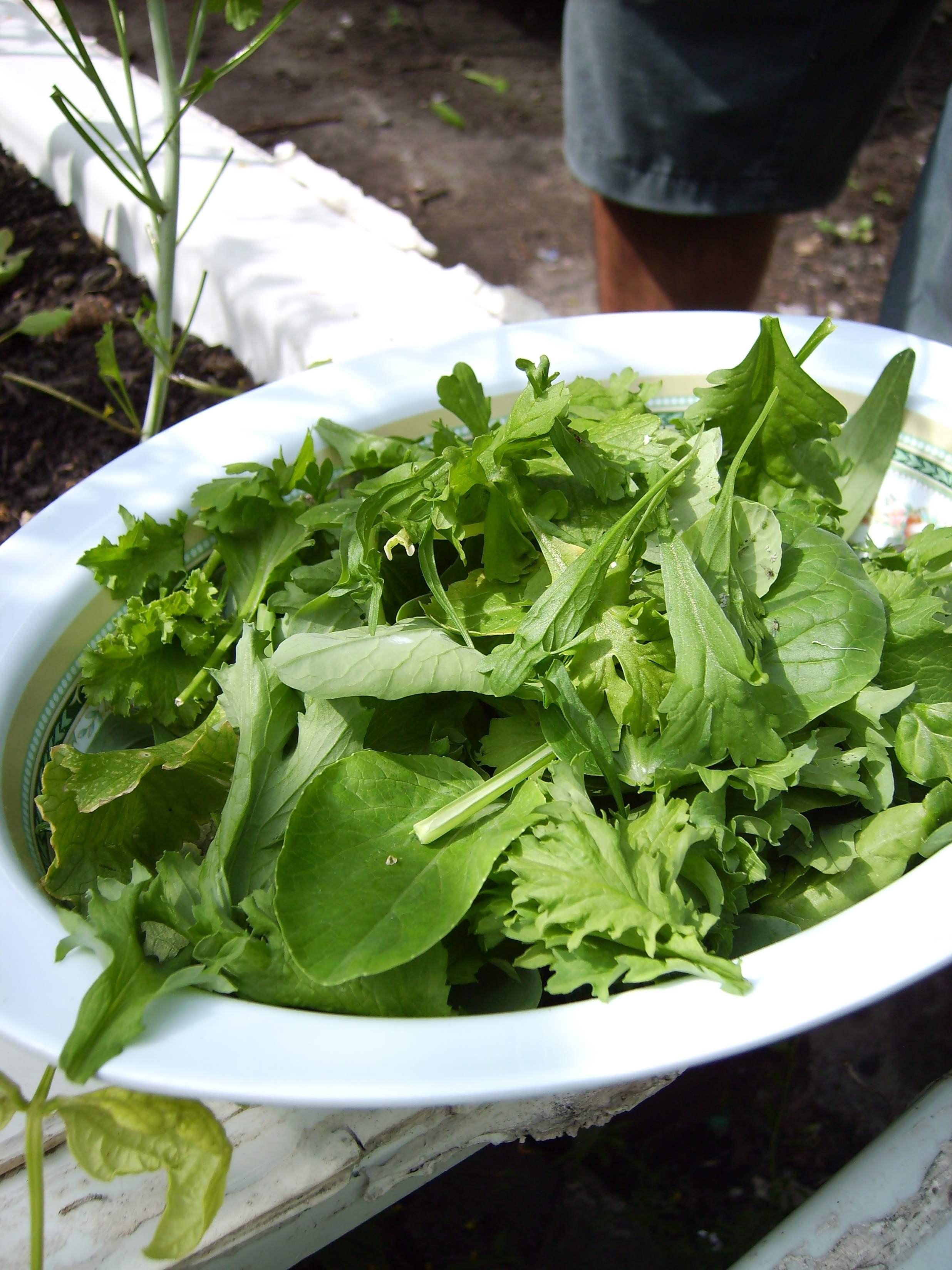 Harvested salad
