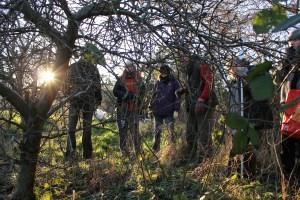 Pruning volunteers