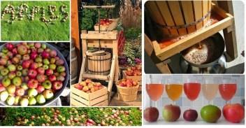 montage pressing apples bigger