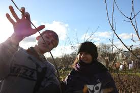 pruning peter hodge abundance oxford with dawn - teaching-skill-share tree care