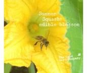16469_summersquashblossomFOTO.jpg