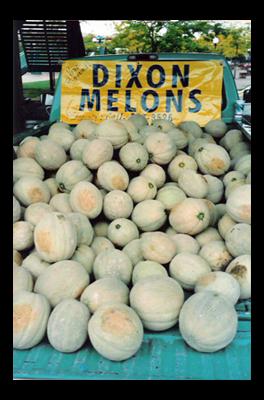 dixon_Melons-web