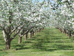orchard-swanson-photo-1.jpg