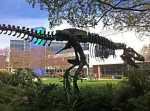 Google_Mountain_View_campus_dinosaur_skeleton_'Stan'