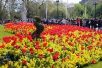troca-da-guarda-flores-buckingham-a-bussola-quebrada