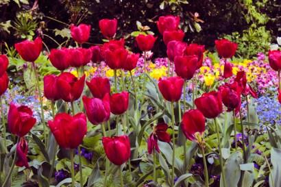 troca-da-guarda-rosas-buckingham-a-bussola-quebrada