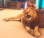 O Maya largou a esposa sozinha perto do leão!