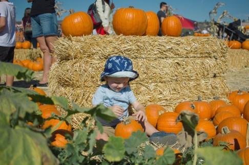 pumpkin-patch-12-of-20