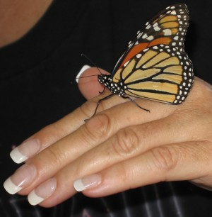 Stories of the ABJ Butterfly & Wayne Dyer's Butterfly