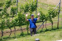 葡萄畑は近くで観察できます。Photo:T.G.