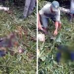 Colono morre esmagado por árvore na zona rural de Rio Branco