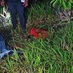 Homem tem olhos furados e é morto com tiro na cabeça no Rosa Linda