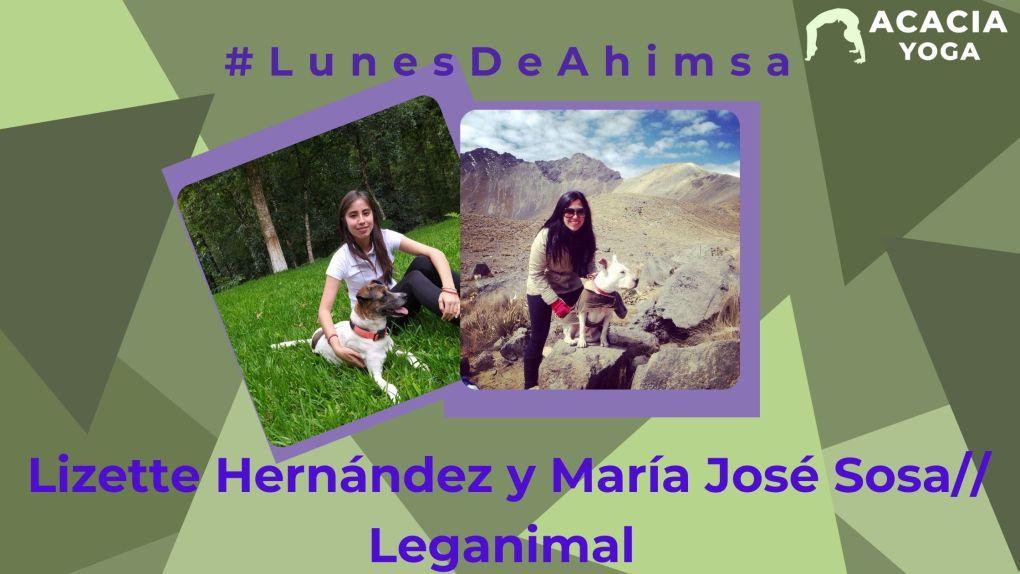 #LunesdeAhimsa