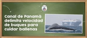 Canal de Panamá delimita velocidad de buques para cuidar ballenas