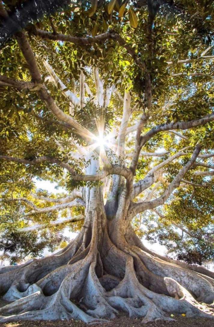 les-arbres-nous-aident-a-guerir